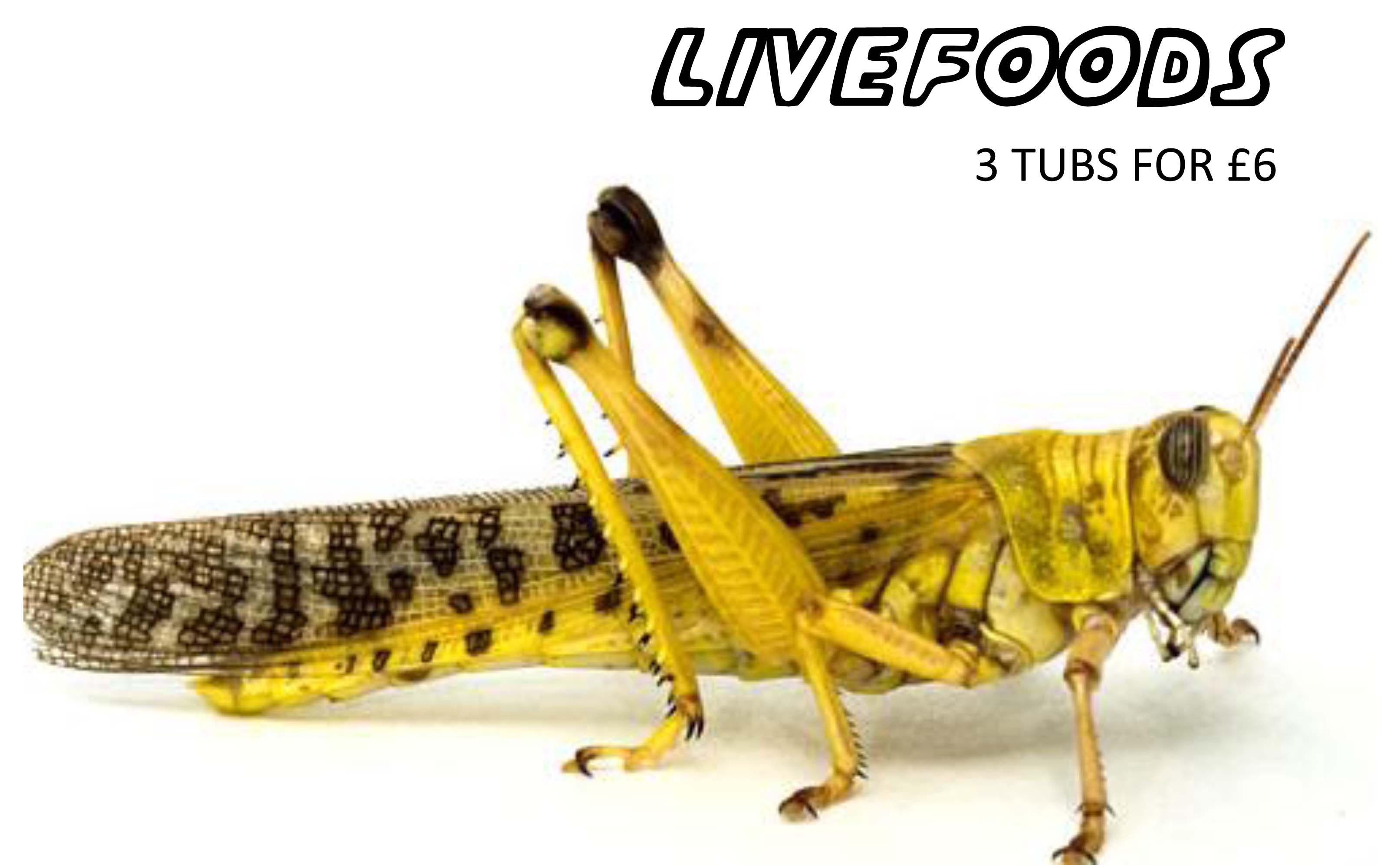 Livefoods         3 TUBS FOR £5.00