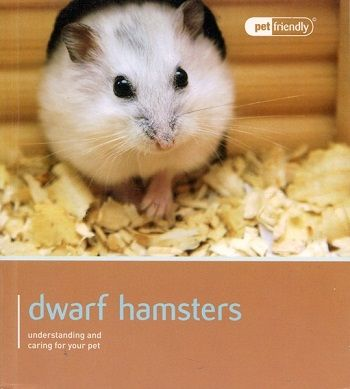 Pet Friendly Dwarf Hamsters