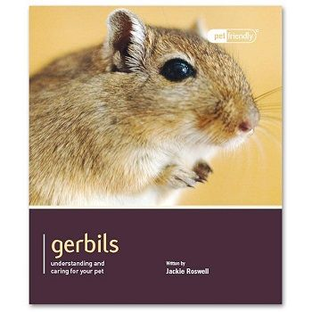Pet Friendly Gerbils