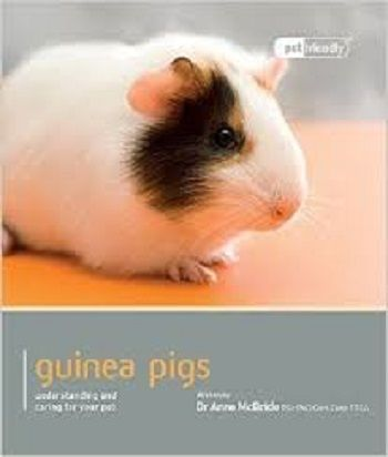 Pet Friendly Guinea Pig